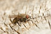 Fly on wood — Stock Photo