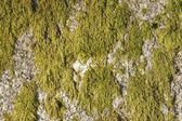 Rock with moss — Stock Photo