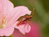 Bug roślin w czerwony kwiat — Zdjęcie stockowe