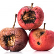 Three rotting apples — Stock Photo