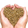 Hemp Seeds — Stock Photo #44023791