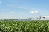 Watering Corn Crop — Stock Photo