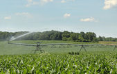 Irrigating a Corn Crop — Stock Photo
