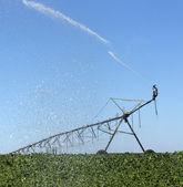 Campo di soia a spruzzo — Foto Stock
