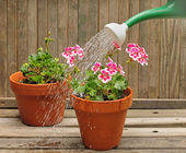Watering Plants — Stock Photo