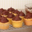 Cup Cakes Cooling — Stock Photo