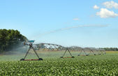 Watering Soy Beans — Stock Photo