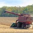 Stock Photo: Harvesting Soybeans