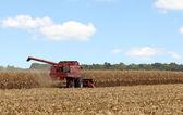 Picking Corn — Stock Photo