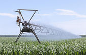 Irrigating Corn — Stock Photo