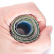 Stock Photo: Hand holding roll of banknotes