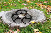 Recycle concept with a cut tree trunk — Stock Photo