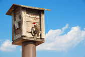 Bird feeders. tree house for the birds with Christmas red hat fe — Foto Stock