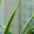 Raindrops — Stock Photo