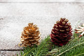 Christmas spruce branches — Stock Photo