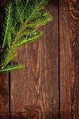 Spruce on planks — Stock Photo