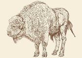Buffalo bull — Stock Vector