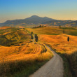 Tuscany, cypress Road — Stock Photo #27569113