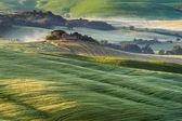 En medio de los campos de la toscana — Foto de Stock