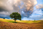 Beautiful lonely tree on a field on a cloudy sunset. — Stock Photo