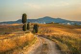 Tuscany, cypress Road — Stock Photo