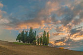 The most famous classic Tuscan landscape, cypresses on a hill — Stock Photo