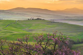 Tuscan green mornings and sunrises, Italy — Stock Photo
