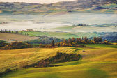Tuscan olive trees and field in near farms, Italy — ストック写真