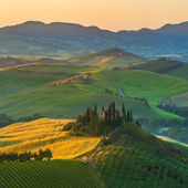 Tuscan olive trees and fields in the near farms, Italy — Stock fotografie