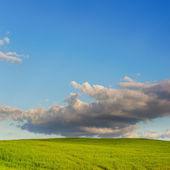 Green field on background and blue sky with clouds — Stock Photo