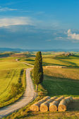 Cypress on the road in the middle of the Tuscan countryside on a — Stock Photo