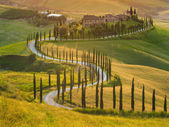 Beautiful cypress-lined road in the light of the setting sun — Stock Photo