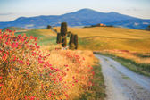 Natural white road in Tuscany, Italy — Stock Photo