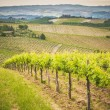 Spring Tuscan vineyards around San Gimignano, Italy — Stock Photo #48165391