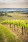 Spring Tuscan vineyards around San Gimignano, Italy — Стоковое фото