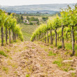 Spring Tuscan vineyards around San Gimignano, Italy — Stock Photo #48297747