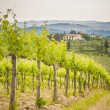 Spring Tuscan vineyards around San Gimignano, Italy — Stock Photo #48297791