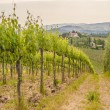 Spring Tuscan vineyards around San Gimignano, Italy — Stock Photo #48679293