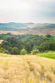 Trees, fields and atmosphere in Tuscany, Italy — Stock Photo