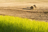 Harvest in summer hot day — Stock Photo