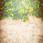 Beautiful background with stone walls and plants — Stok fotoğraf