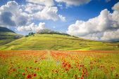 Summer day in the beautiful and colorful area of Castelluccio di — Foto de Stock
