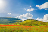 Summer day in the beautiful and colorful area of Castelluccio di — Stockfoto