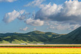 Beautiful full color spring flowers in Umbria, Italy — Stock Photo