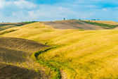 Fields and peace in the warm sun of Tuscany, Italy — Stock Photo
