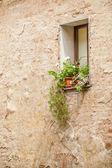 Beautiful flowers in the Italian window, Tuscany — Stock Photo
