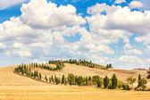 Typical Tuscan road surrounded by cypress trees and fields in su — Stock Photo