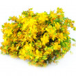 Herbal medicine hypericum — Stock Photo