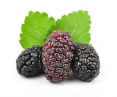 Mulberry with leaves — Stock Photo