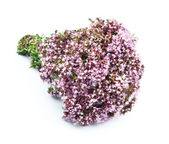 Flower of origanum — Stock Photo